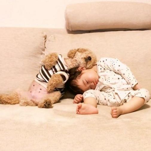 トイプードルと女の子が添い寝する可愛い癒し動画