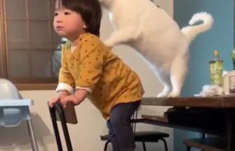 白猫のブランちゃん