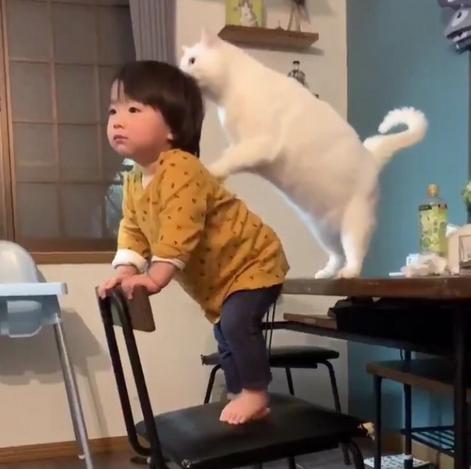 1才の男の子を優しく見守る白猫ブランちゃんの動画が人気沸騰中!