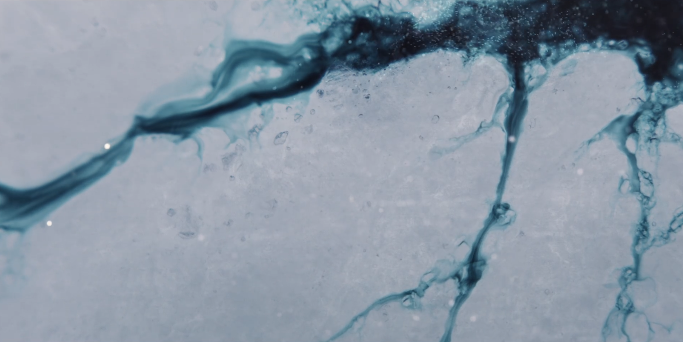 二酸化炭素を食べる細菌の発見